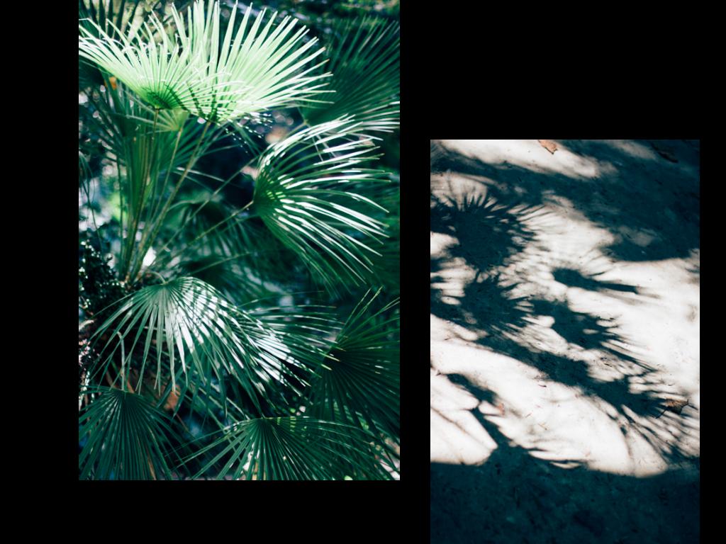jardim botanico lisboa - hannelore veelaert - au pays des merveilles-11