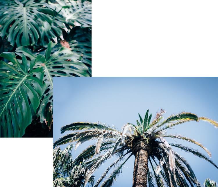 jardim botanico lisboa - hannelore veelaert - au pays des merveilles-3