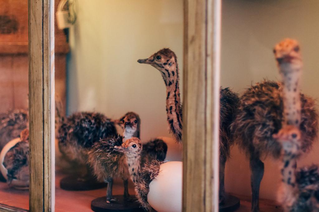 animaux speciaux in leuven - by hannelore veelaert for au pays des merveilles-22