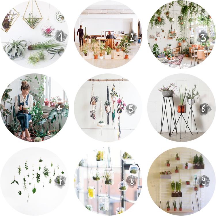 collection_ plants via au pays des merveilles