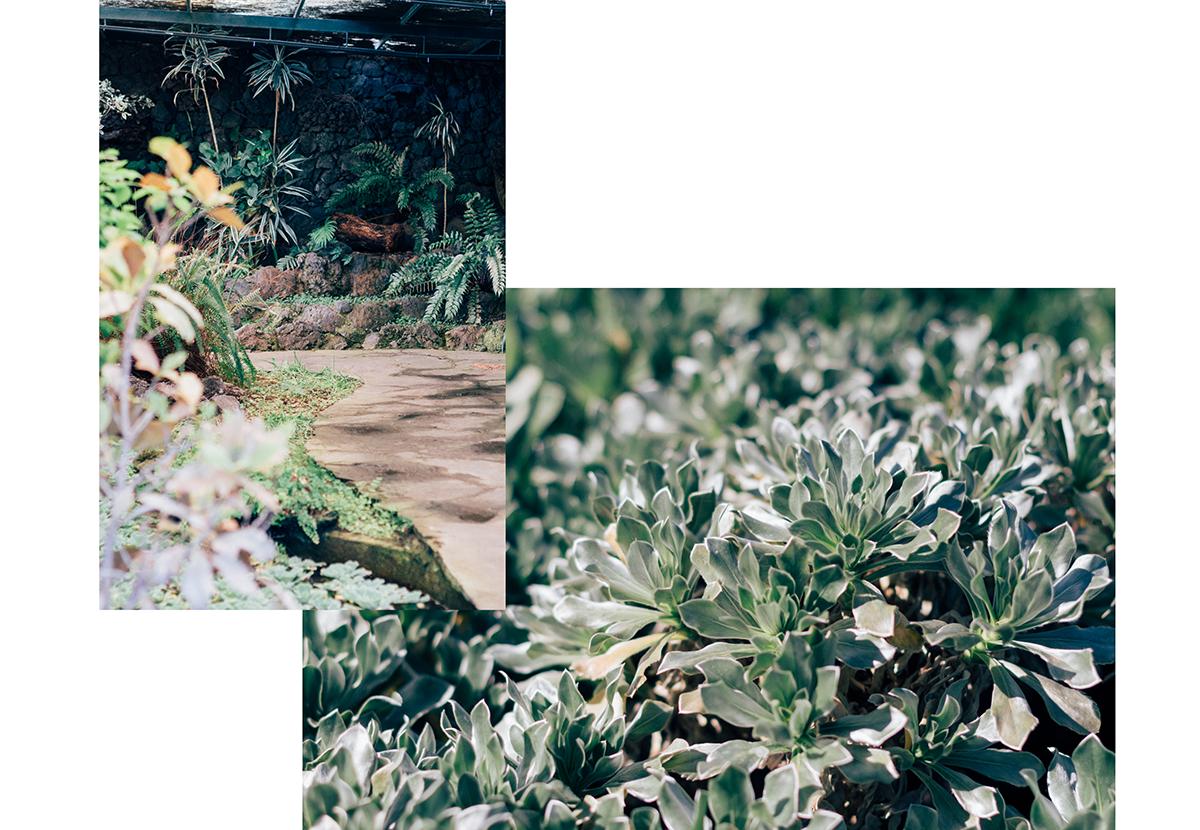 Botanical Garden of Gran Canaria - Hannelore Veelaert for Au pays des merveilles