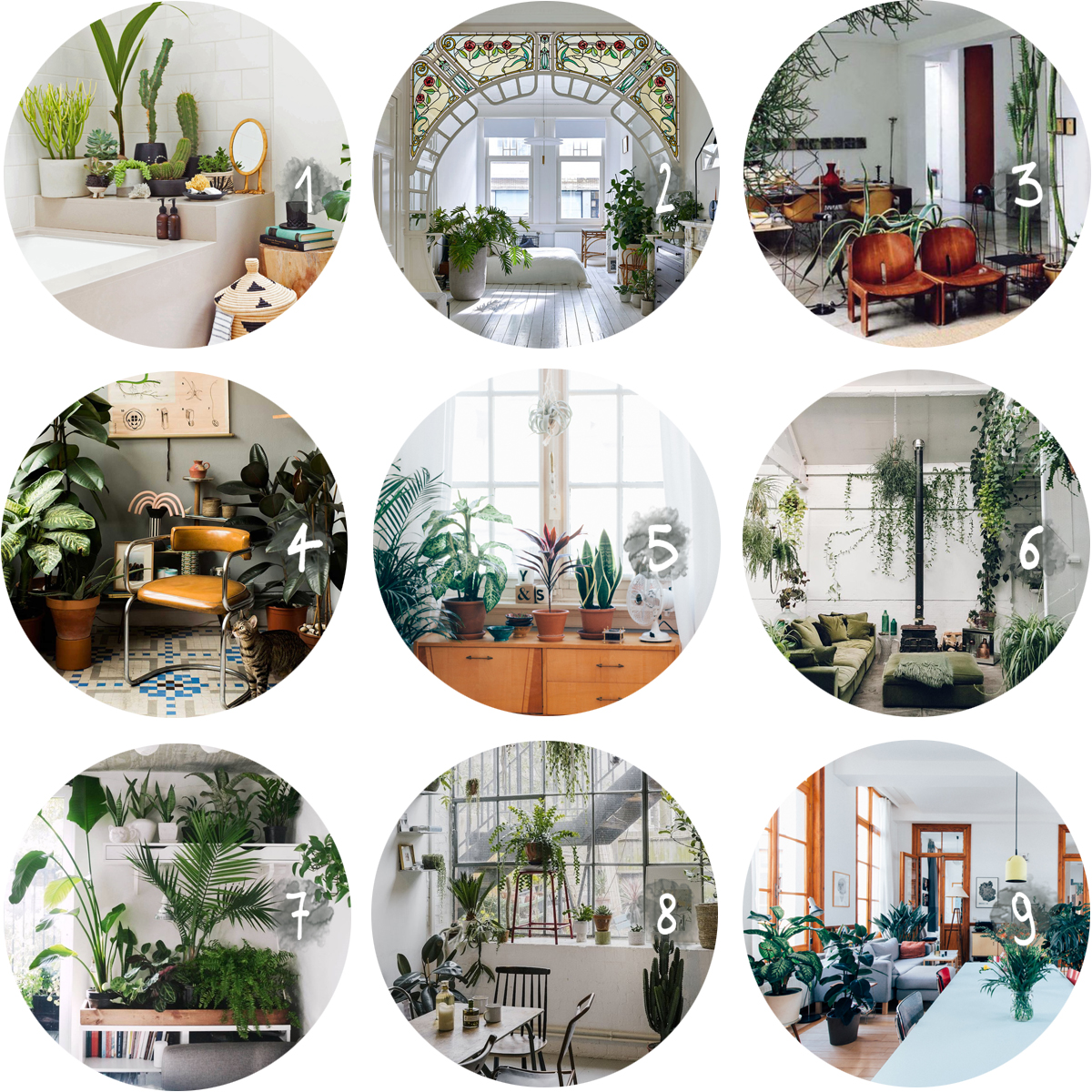 Collection-wonderplants 2 by au pays des merveilles